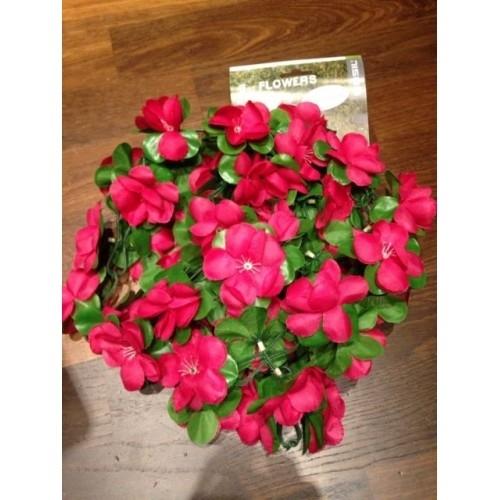 Λουλούδια σε σειρά χρώμα: Φούξια 50180 Δαλαβίκας bikes